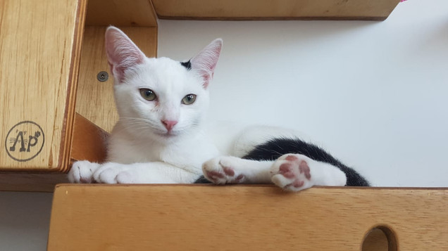 baby-gato-para-adocao_11.jpeg