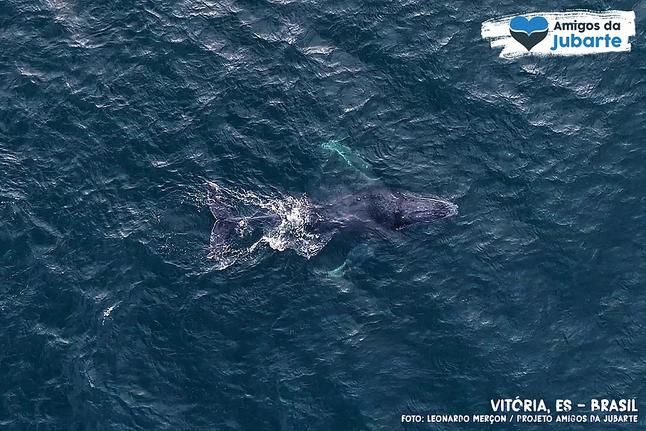 As Baleias-Jubarte chegam em Vitória! Temporada 2018