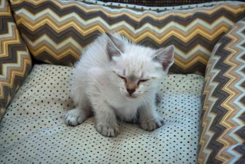gato-bebe-branco-macho_03-1jpg