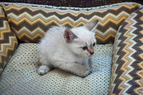 gato-bebe-branco-macho_03-3jpg
