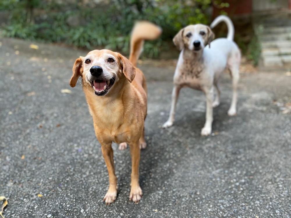 Como Cuidar Melhor Do Seu Cachorro