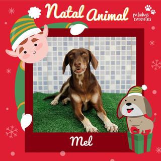 Kit Natal - Mel