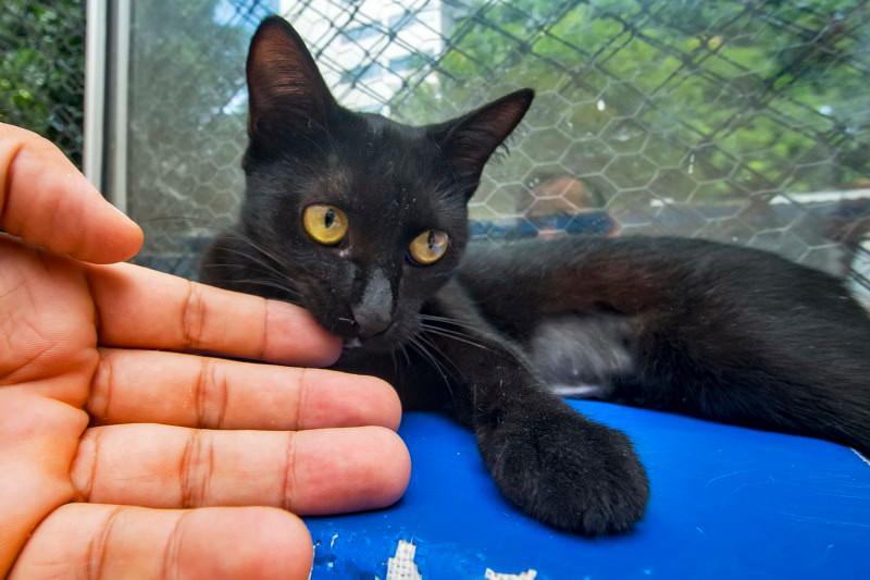 Deixe gatinho residente cheirar a sua mão