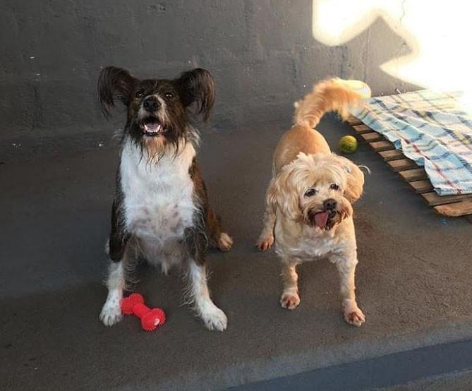 Milli e Bart - adoção conjunta