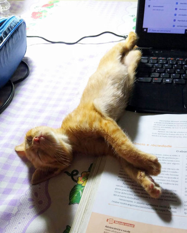 Lorde, um gatinho fofo, cansou de trabalhar.
