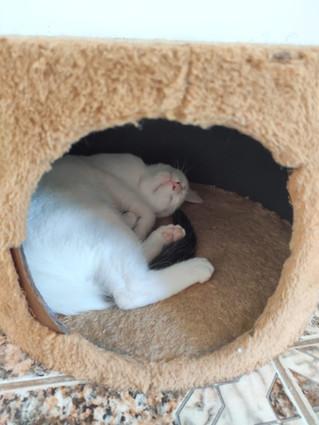 baby-gato-para-adocao_01.jpeg