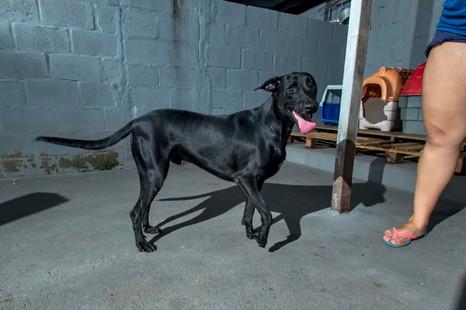 mestre_cachorro_patinhascarentes_04jpg