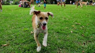 10 Dicas para Proteger o seu Pet do Calor Excessivo do Verão