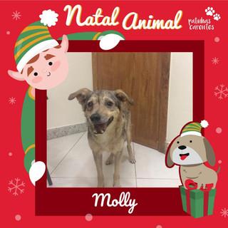 Kit Natal - Molly
