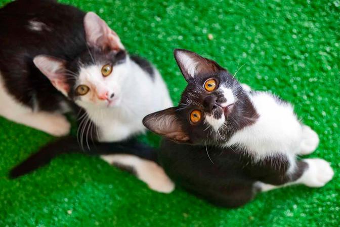 acerola-e-aladin_gatos-para-adocao_02jp