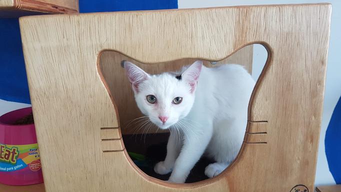 baby-gato-para-adocao_10.jpeg