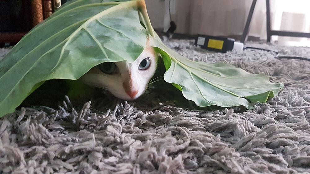 gato embaixo de uma folha