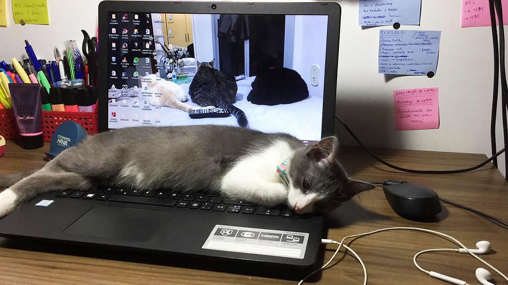 Panqueca gosta de dormir no home office