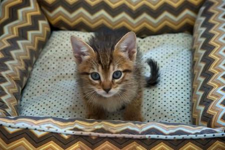 gato-bebe-marrom-tigre-macho_03-2jpg