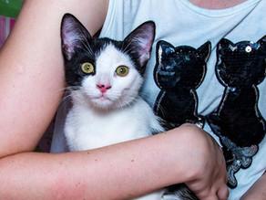 10 Dicas para Cuidar Melhor do seu Gato