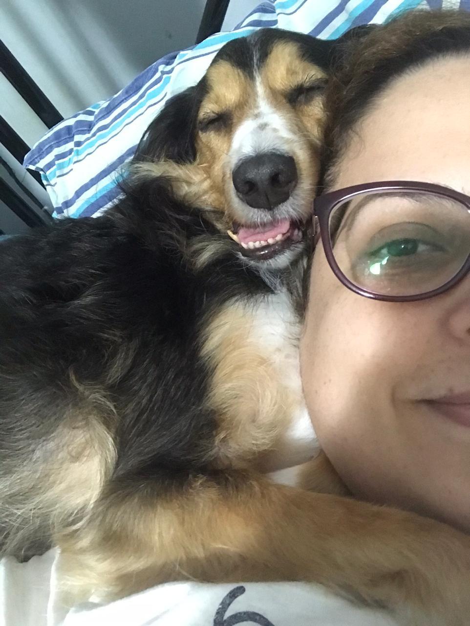 Cachorro relaxado com a boquinha aberta