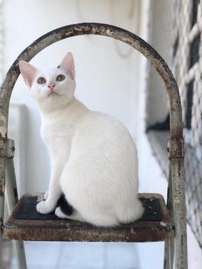 baby-gato-para-adocao_05.jpeg