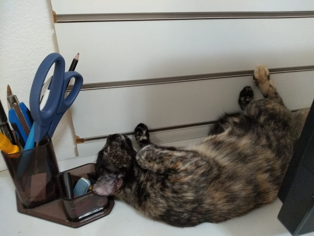 Leopoldina tira uma soneca no escritório