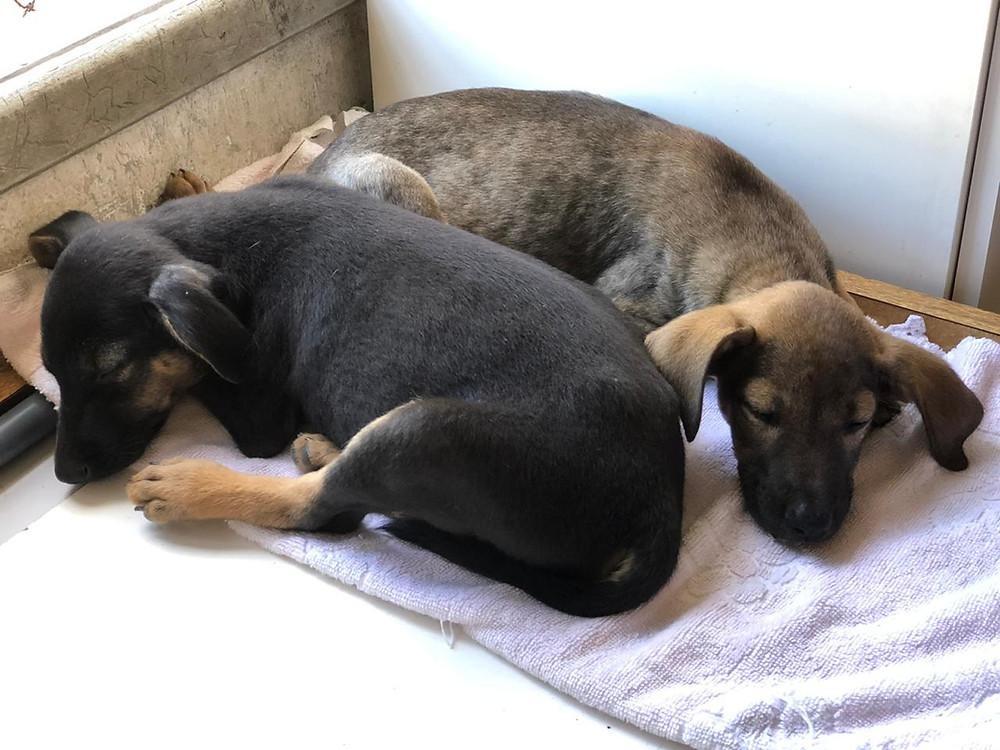 Cachorros para adoçao ; Patinhas Carentes, Vitória-ES