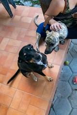 geraldo_cachorro_patinhascarentes_07jpg