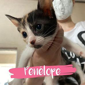 Penelope-gatinha-tricolor.jpg