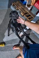 mestre_cachorro_patinhascarentes_03jpg
