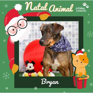 Kit Natal - Bryan