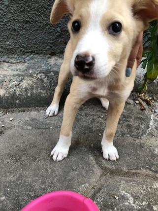 frederico_cachorro_patinhascarentes_04jpeg