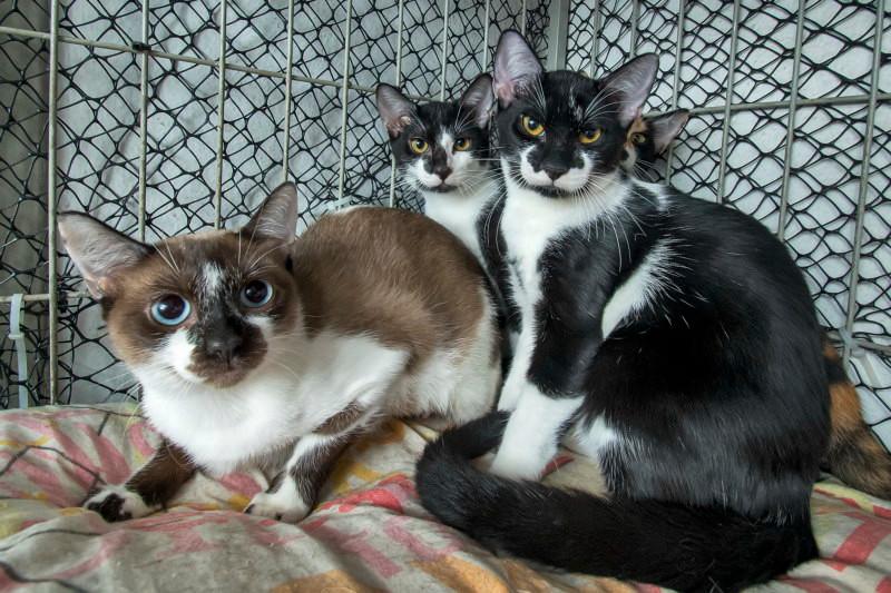 O gatil - Patinhas Carentes