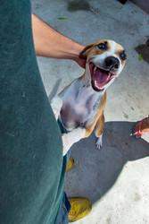 juca_cachorro_patinhascarentes_04jpg