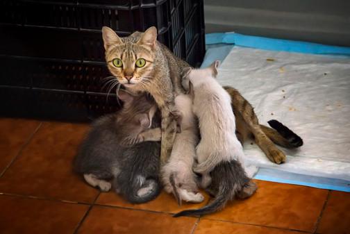 gato-abigail-com-filhotes_patinhascarent