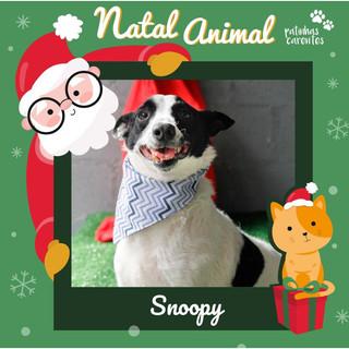 Kit Natal - Snoopy