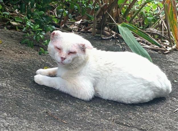estropiado_gato-residente-pedra-da-cebol