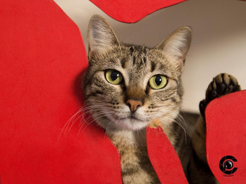 Marú - gato para adoção