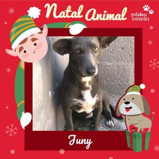 Kit Natal - Juny