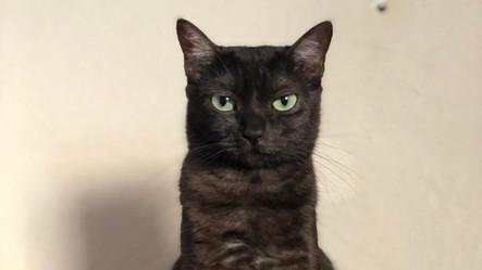 Catarina - Gato para Adoção