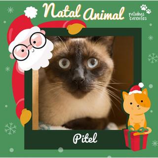 Kit Natal - Pitel