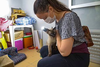 pitel_gato-para-adocao_patinhascarentes_