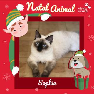 Kit Natal - Sophie