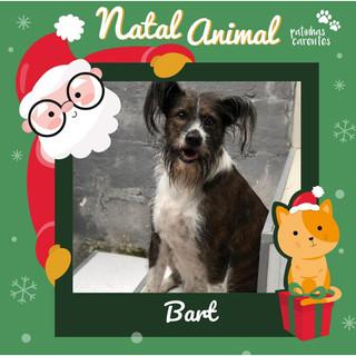 Kit Natal - Bart