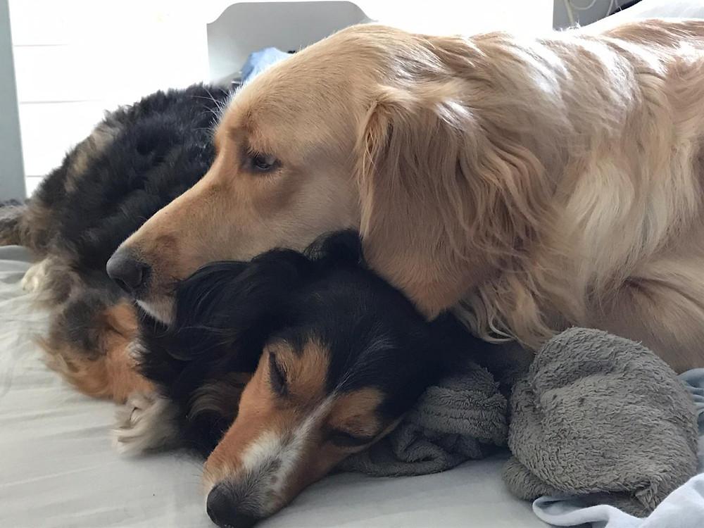 Amor entre irmãos