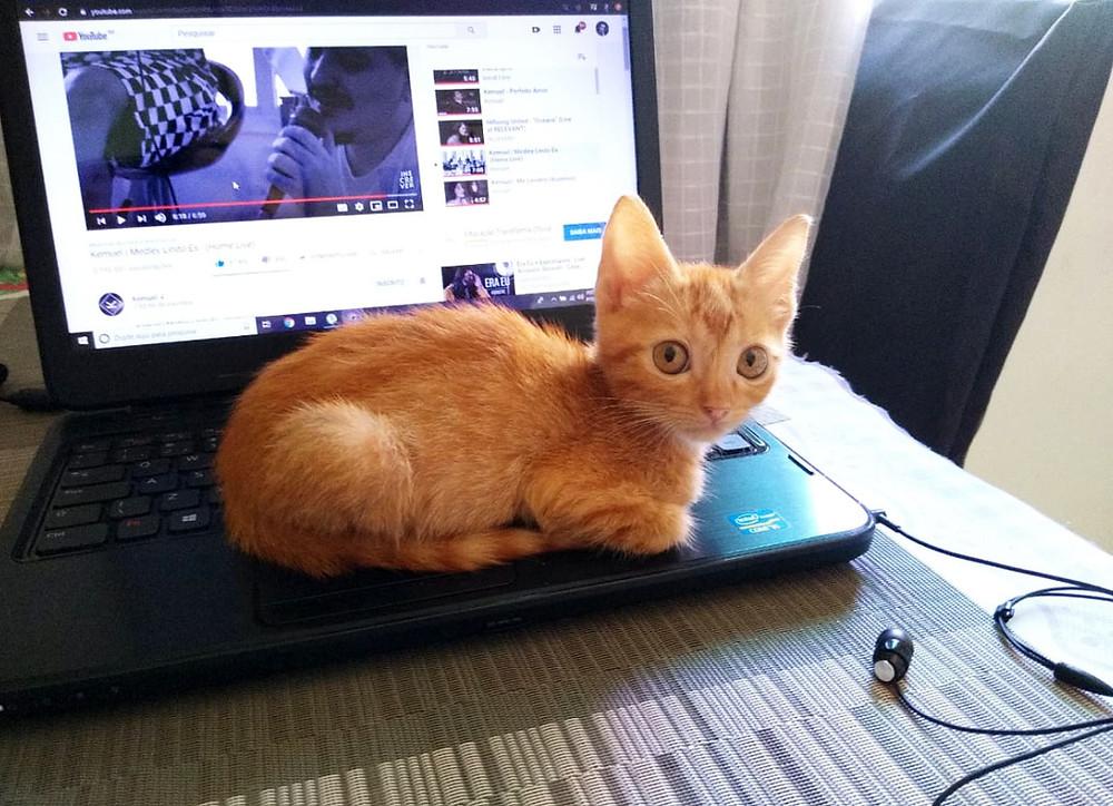 Lorde (gatinho fofo) quer atenção