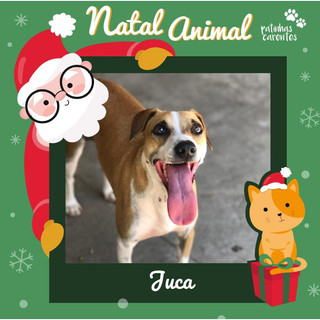 Kit Natal - Juca