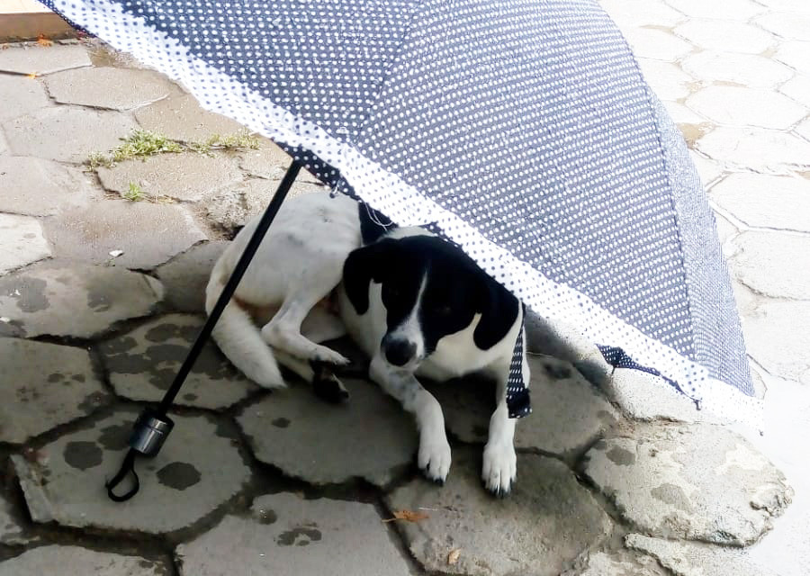 pic_cachorro_patinhascarentes_12jpeg