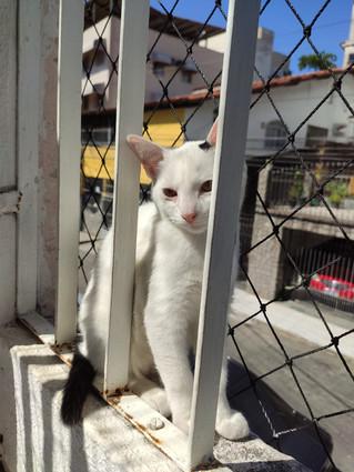 baby-gato-para-adocao_03.jpeg
