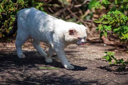 estrupiado_gato-residente-pedra-da-cebol