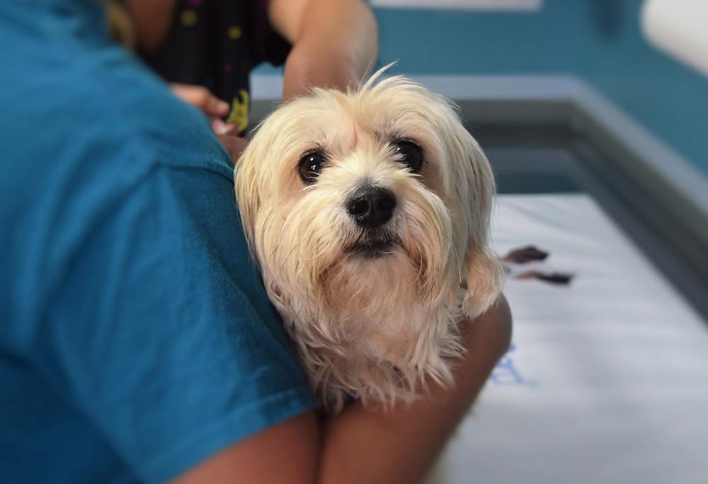 Veterinário: Primeiro exame de cachorro