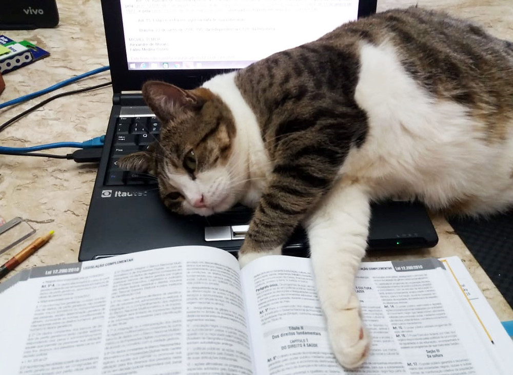 Dona Filó tira uma soneca no laptop