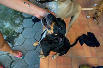 geraldo_cachorro_patinhascarentes_01jpg