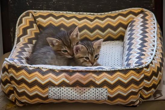 gatinhos-bebes-dormindo_01jpg